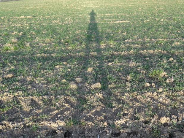 "Schattenspiel ""the long Trailrunner legs"""